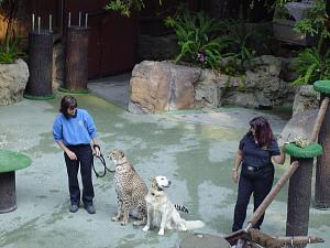 Click image for larger version  Name:SD ZOO25.jpg Views:16 Size:227.6 KB ID:30956