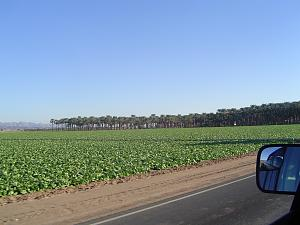 Click image for larger version  Name:CA Date Tree Farm - 1.jpg Views:9 Size:197.7 KB ID:26084