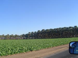 Click image for larger version  Name:CA Date Tree Farm  - 2.jpg Views:7 Size:205.2 KB ID:26085