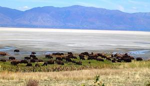 Click image for larger version  Name:Antelope Island State Park - Salt Lake City, UT (3).JPG Views:9 Size:264.6 KB ID:31402
