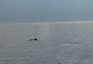 Click image for larger version  Name:Bar Harbor & Whale Watching (32).jpg Views:16 Size:387.5 KB ID:25366