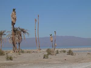 Click image for larger version  Name:Salton Sea6.jpg Views:6 Size:131.8 KB ID:27821