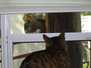 Click image for larger version  Name:Springwood Squirrel 10.jpg Views:19 Size:159.9 KB ID:26719