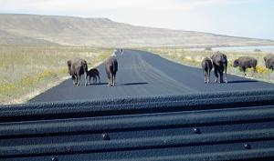 Click image for larger version  Name:Antelope Island State Park - Salt Lake City, UT (6).JPG Views:8 Size:270.8 KB ID:31401