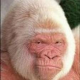 vanillagorilla's Avatar